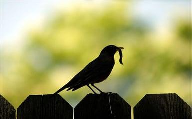 Early_bird_BG1KPW_2977892b